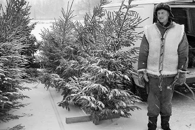 Mikael Sundbäck säljer julgranar - myy joulukuusia